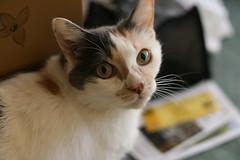 Chloe (Diane's Cat)