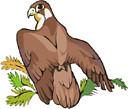 eagle (3doel82) Tags: fish bird animals insect gambar koleksi ikan belajar burung binatang carnivora serangga mamalia amphibi
