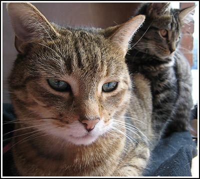 Ianto&Loki copy