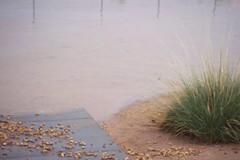 100_2850 (wtfmuchd|Juicy) Tags: ca flood weak ridgecrest