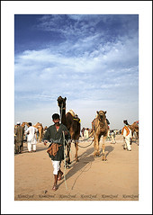 Gathering of the camels (KamiSyed.) Tags: wedding pakistan man men kids women culture arab desi pakistani punjab cultural punjabi islamabad weddingphotographer rawalpindi urdu taxila weddingphotography woaman studio9 weddingphotographs weddingpix kamisyed kamransafdar chinak
