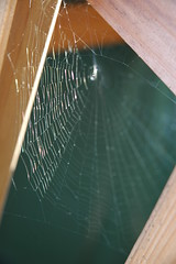 Sparkly web (HnyBny1969 (Regina)) Tags: light spider shine web sparkle impressedbeauty