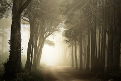The realm of shadows (Lus C) Tags: mist tree portugal forest sunrise sintra biosphere peninha deforestation pprowinner thesecretlifeoftrees sustainableforestmanagement carbonoffsetprogramme