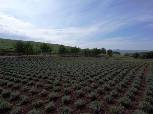 Furano hills