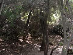 In the Trees (cariberry) Tags: trees israel hiking galilee september 2008 birthright taglit israeloutdoors mtmeron mountmeron