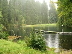 Thüringer Wald (ToJoLa) Tags: wood autumn mist lake green nature water rain fog canon meer herfst 101 bos wald regen aaa abigfave aplusphoto canong9