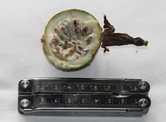 Passiflora coccinea ((Passifloraceae). Fruit