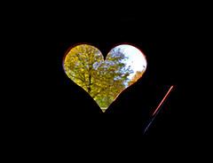 Autumn love (Jos Mecklenfeld) Tags: autumn love heart groningen bourtange westerwolde