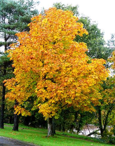 Autumn colour Auchincruive