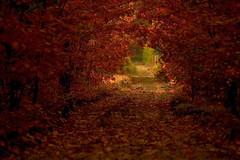 [フリー画像] [自然風景] [道の風景] [紅葉] [森林/山林]       [フリー素材]