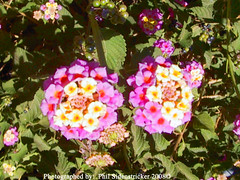 Cute Flowers (phil_sidenstricker) Tags: flower floral donotcopy valleyofthesunphoenixmetro upcoming:event=981998 southmountainfarmphoenixazusa