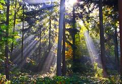Herfst in Ruurlo (Truus) Tags: autumn sun licht herfst zon ruurlo truus bladeren