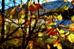 the light painter (Nicolas Valentin) Tags: autumn light tree leaves scotland mywinners colorphotoaward aplusphoto