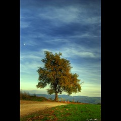 Un arbre (christian&alicia) Tags: tree nature arbol catalonia greatshot fields catalunya camps arbre hdr campos cardedeu catalogne addictedtoflickr flickrsbest abigfave aplusphoto thesecretlifeoftrees multimegashot qualitypixels hdraward grouptripod updatecollection