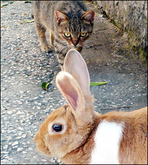 Chi ha paura di Peter Rabbit (honeycri) Tags: pet cats rabbit cat catwomen lumix chat kitty panasonic gato wendy gatto gatti chaton coniglio panasoniclumix cc100 lx2 panasoniclx2 honeycri sfidephotoamatori