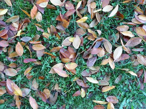 folhas tombadas