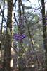 Purple power (kurokojpn) Tags: japan tokyo orlando 日本 東京 karuizawa nagano photosjapan kuroko01 photographytokyo photostokyo bestoftokyo tokyobest orlandojpn thetokyopost kurokojpn