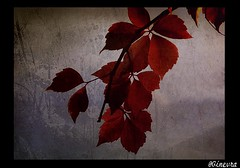 Red_Autumn (Gorgo07[ tutto un equilibrio sopra la Follia]) Tags: legacy ourtime pabloneruda fabulae colorsofthesoul coppercloudsilvernsun gorgorossofoglieautunnolumixsirmionequality pixelstextureelaborazionepost produzionetrolledproudflickrvaulttistheseasonmemories bookimago fotocompetition|fotocompetitionbronze