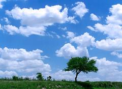 Arbol Solitario / Solitary Tree (DiEgo bErrA) Tags: sky tree verde green clouds way landscape arbol camino escenario paisaje scene cielo nubes postal celestial celeste colorphotoaward