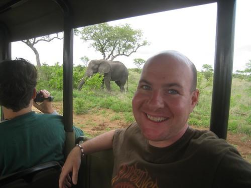 Roadside elephant