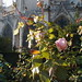 Winter roses growing in the garden behind Notre Dame