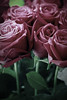 !! .. من لي ف هالدنيا سواااكـ (ًWeda3eah*) Tags: new red roses 3 green love colors for all you l p lovely qatar iknow aseel allbum a weda3eah a7bchmamaelael3bd3 el2bdp