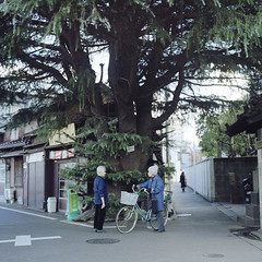 under the big tree (Teppei Takahashi) Tags: life morning tree 120 japan mediumformat tokyo communication housewives bronica sq neighbourhood yanaka gossipparty