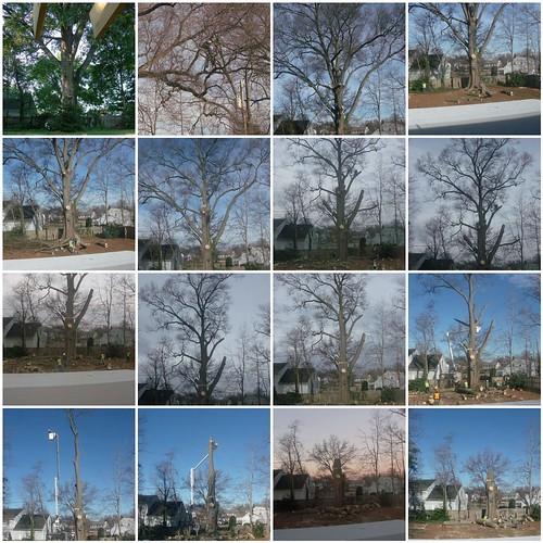 Tree Removal Mosaic