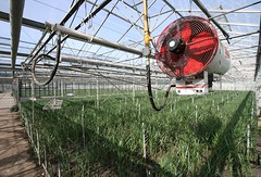 Commercial Greenhouse Automatic Heating System
