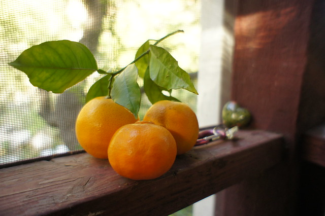 Two oranges and a pixie tangerine