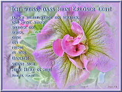 Mein Erlöser / My Redeemer (Martin Volpert) Tags: flower fleur christ god blossom faith flor blossoms pflanze kirche blumen bible blomma christianity blume bibbia fiore blüte blomst bibel virág gemeinde lore biblia bloem blüten gott blóm çiçek floro kwiat flos ciuri glaube bijbel kvet kukka cvijet ecclesia flouer glauben christentum bláth jesuschristus cvet zieds bibelvers õis floare תנך blome žiedas bibelverskarte mavo43 sensationalcreationsofexcellence hiob1925