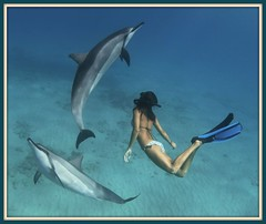 Hawaiian Spinner Dolphins (Naia) (bodiver) Tags: ambientlight wideangle freediving dolphins fins 523 underwatermodel orcadivers