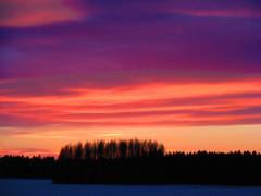 The colors of the evening. (Vaeltaja) Tags: pink red sky lake nature forest suomi finland spring april oulu soe mets luonto punainen naturesfinest kevt taivas kuivasjrvi huhtikuu vaaleanpunainen platinumphoto superbmasterpiece diamondclassphotographer goldstaraward