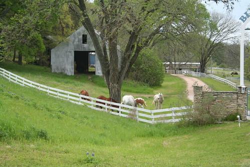 Blue Willow Farm (2)