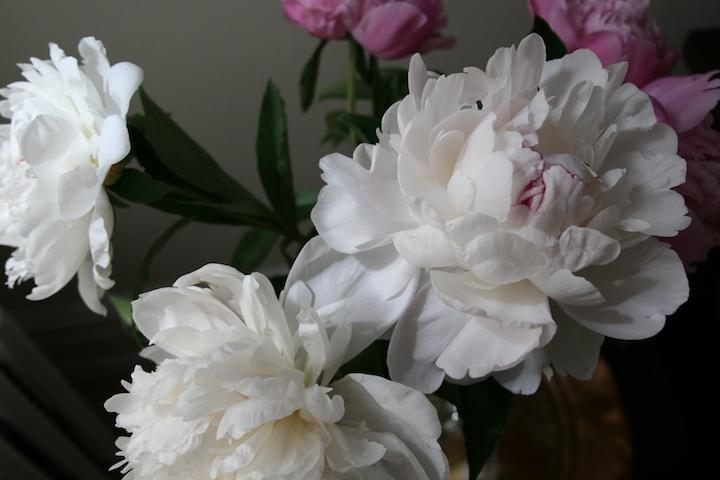 2467627875 ba244f5db1 o scent and sensibility