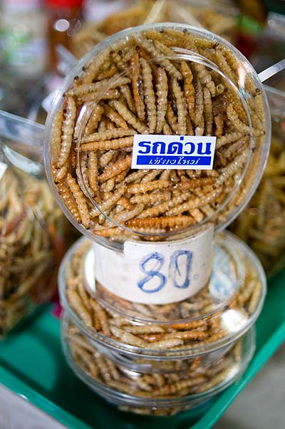 Rot duan, deep-fried worms, Talaat Ton Phayom, Chiang Mai