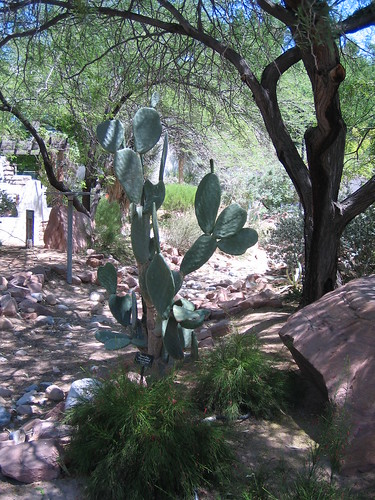 UNLV Arboretum