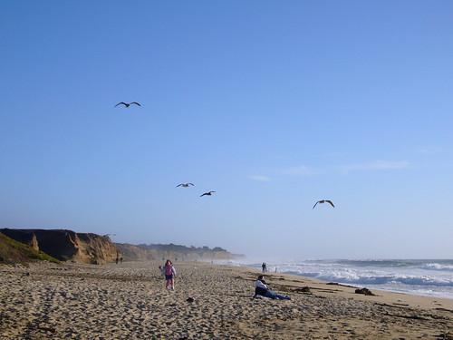girl and gulls at half moon bay