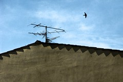 un antenna non fa primavera (supivas) Tags: blue roof summer sky tetto cielo finepix fujifilm swallow antenna rondine s1000fd
