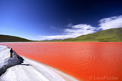 Red liquidness (LucaPicciau) Tags: life red rot southamerica nature america landscape volcano rojo desert graphic south bolivia paisaje lagoon andes ng laguna montaa rosso colori vulcano altiplano uyuni bolivie ande lipez colorada abaroa picciau lucapicciau