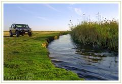 HUMMER IN THE NATURE (YOUSEF AL-OBAIDLY) Tags: nature rio kuwait hummer الكويت flickrlovers teacheryousef يوسفالعبيدلي