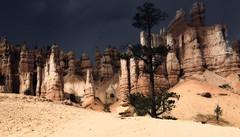 parade of hoodoos (charlesgyoung) Tags: utah sandstone limestone hoodoos brycecanyonnationalpark