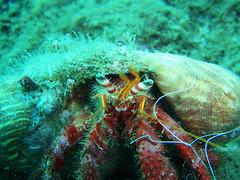 2684771647_2b3d17fce3 (coismarbella) Tags: marbella crustaceos