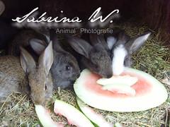 rabbit1 (Biniileiin) Tags: rabbit foot eating stall rabbits stable kaninchen hasen melone