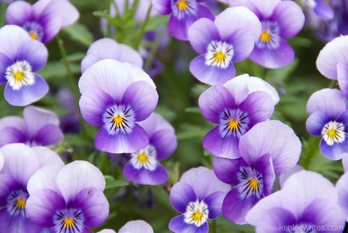 Ofuna Botannical Gardens  087