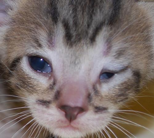 kitten sized cat