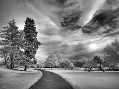 Denver Park (Kimberly Dickinson) Tags: park trees sky nature beauty clouds landscape scenery colorado path denver citypark digitalinfrared bwinfrared modifiednikoncoolpix8400