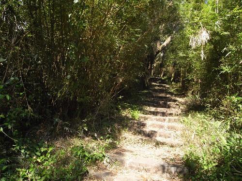 你拍攝的 11竹林步道。