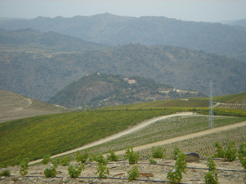 Quinta de Sidrô, new and old vines, Real Companhia Velha