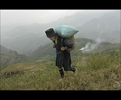Bringing the Rice Home, one bag at a time (NaPix -- (Time out)) Tags: portrait woman asia southeastasia rice working harvest vietnam explore hay emotions sapa hmong carrying montains paddies tms blackhmong phangxipang tellmeastory indigoblue fansipan explored napix mounghoavalley indigoblueclothing thetallestmountaininsoutheastasia huanglienson